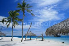 Blue (maapu) Tags: blue sea vacation fab nature island sand asia palm palmtree coconuttree maldives naturesfinest interestingness4 i500 saarc flickrsbest canon400d maapu mauroof diamondclassphotographer ysplix flickrelite