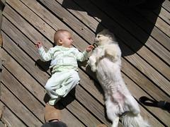 Dog and Baby Sunbathing