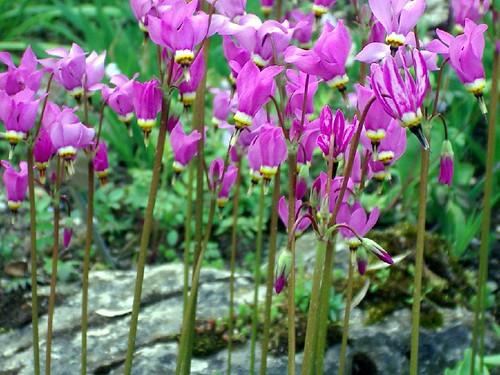 beestingflower