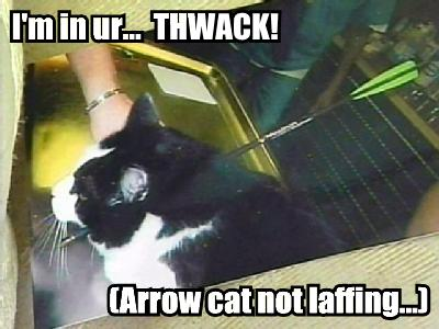 Arrow Cat Not Laffing