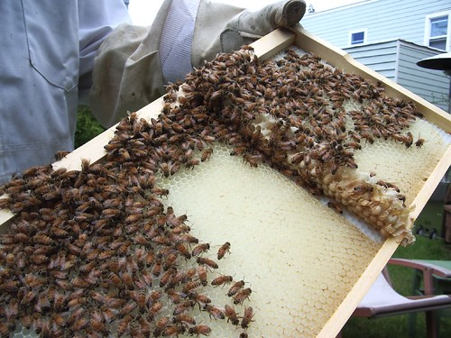 Beekeeping 2267