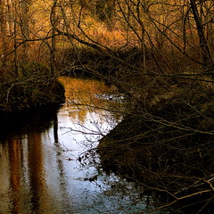 My peaceful wild river! (Denis Collette...!!!) Tags: autumn light sun canada reflection sunrise automne river soleil bravo peace lumire peaceful rivire reflet qubec paix leverdesoleil wildriver magicdonkey flickrsbest monbelamour abigfave deniscollette superbmasterpiece world100f absolutegoldenmasterpiece
