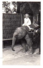 Carol and the elephant