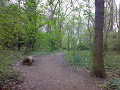 Walk to the train (_leisa) Tags: emailed mywalktowork dulwichwoods