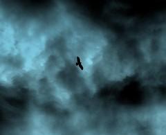 Lady Hawk (Ewciak & Leto) Tags: blue sky storm nature night clouds 500v20f hawk fantasy legend canoneos350d mystic blueribbonwinner ladyhawk supershot 250v10f anawesomeshot impressedbeauty v401500 v101200 v76100 v501600 v601700 v701800 v201300 v301400 v801900 flickrphotoaward v9011000 v10001250