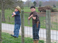 Boys on Fence