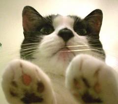 binky (axiom_driver_1969) Tags: cats cute beautiful cat paw sweet adorable kitty cutie cutecat beautifulcat anawesomeshot