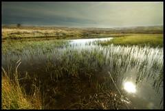 wildmoor (Mark Twells) Tags: sun topf25 water pool reeds topv333 long shropshire topc50 sigma moor 1020 mynd reedbed wildmoor cotcmostinteresting supershot