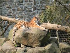 Dierentuin Rhenen (klarifoontje) Tags: animals dieren rhenen dierentuin