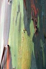 IMG_0159 (morphblade) Tags: rainbowtree