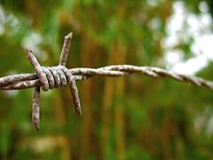 -x---- (Igor Moraes) Tags: wire rust dof bokeh barbed ferrugem arame farpado