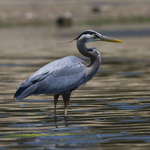 Pollution Effects on Birds