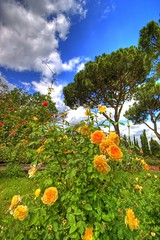 ... (Scatti di memoria) Tags: blue roses sky italy rome roma nature colors rose yellow nikond70 colori gree hdr roseto naturalmente naturesfinest photomatix sigma1020 favoritegarden cieloromano giardinoromano