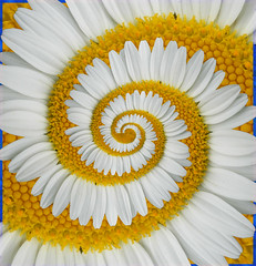 infinity (GoShiva) Tags: summer flower macro art yellow photoshop spiral spring perfect infinity gimp escher effect droste 25faves mathmap abigfave escherdrosteeffect