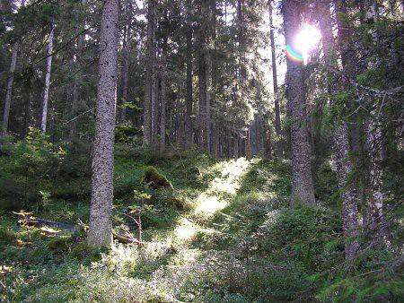 Koli, parque natrual de Finlandia