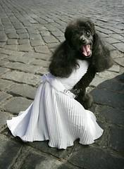 Marilyn Dog