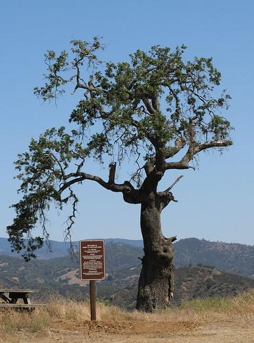 Oak, sign