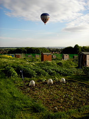 Hot air balloon over the allotments. (avtost) Tags: summer hot kitchen vegetables garden drive early potatoes air main jerusalem cucumber balloon first fork vegetable soil potato cameron crop cabbage windsor wiltshire allotment devizes tool plot artichoke cloche allotments