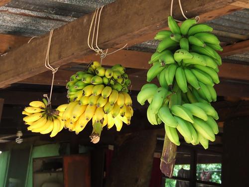 Saipan, A'be's house - aga yan chotda (ripe & unripe bananas)