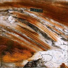 Colors of wood - by jurek d. (awayski)