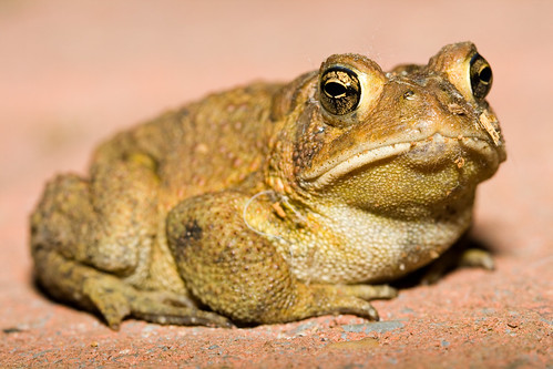 Toad - Full shot