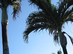 IMG_0582 (burt is awesome) Tags: hawaii napalicoast kuauii