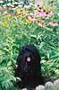 Della cone flowers 0703