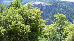 P1020549 (vishu_itbhu) Tags: california yosemitenationalpark vishu