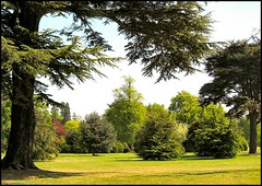 From under the Trees (Lincolnian (Brian) - BUSY, in and out) Tags: trees england green beautiful nt lovely1 lincolnshire abc nationaltrust belton parkland beltonhouse 50club treesubject