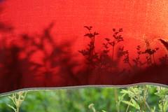 Summer (yepyep) Tags: summer garden 100v10f portfolio mysite mybest10 4aces theflickys yepyep newphotographer abigfave