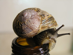 Snail 3 (optically active) Tags: olympusc5060 snail shell nature beerbottle