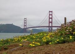Golden Gate flowers (shutterBRI) Tags: 2005 sf sanfrancisco california travel bridge flowers vacation canon photography golden photo gate powershot goldengate a80 shutterbri brianutesch brianuteschphotography