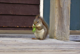 Squirrel on a diet ;-)