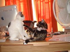 DSCF0043 (judey) Tags: twinkle pixel kitten cats