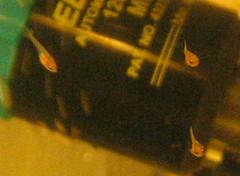 tiny fry (flaring) Tags: betta splendens spawn fry tiny fish eggs bubblenest aquaria