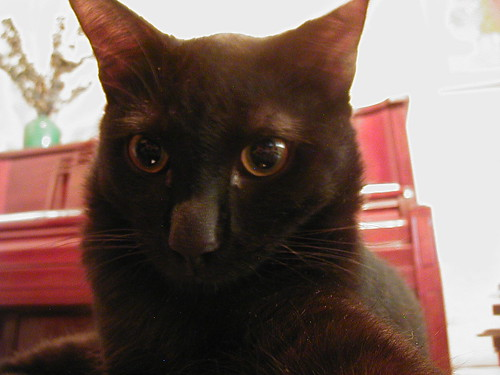 Black cat Metaphor