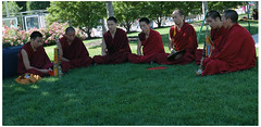 Monks in the Grass