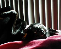 DJ asleep in a sunbeam
