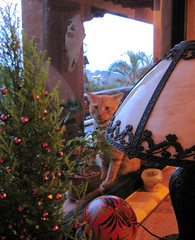 On the Outside Looking In! (rainy city) Tags: beautiful cat orangecat simba catsandwindows