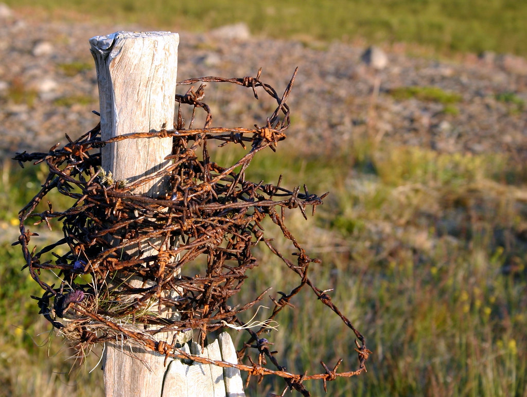 Rusted barbwire on a fence pole