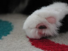 poppy foot (unabashed) Tags: 2005 hairy pet animal cat furry toes kitties cuteness