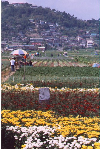 flower fields, trinidad