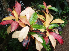 Multicolor Leaves