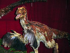 Feathered Dinosaurs 1