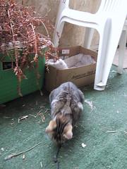IMG_0020 (M3Li55@) Tags: bastion cat