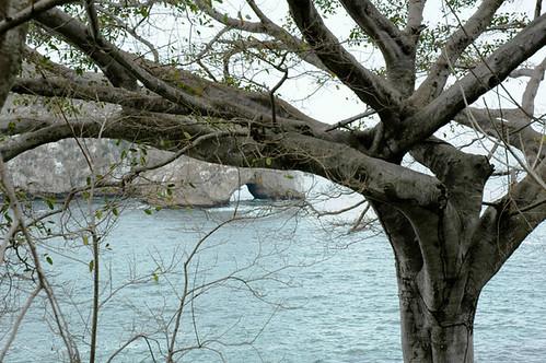 tree los arches puerto vallarta mexico by Wonderlane