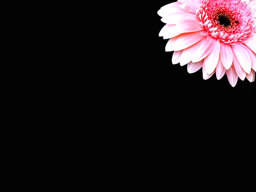 A Pink Flower For Desktop Wallpaper