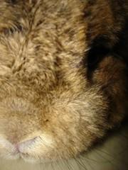 my sweet rabbit ! (ANmitsu) Tags: rabbit usagi