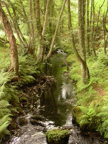 Rio entre árboles