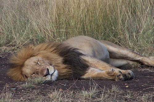 Safari en el África